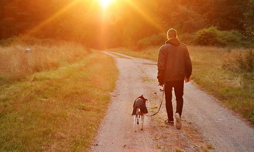 about-dog-walking-sunset