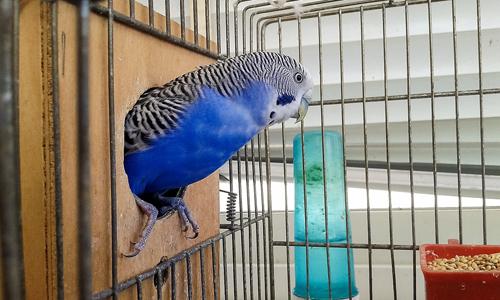 services-bird-parrot