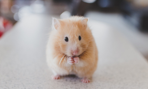 services-hamster
